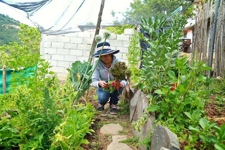 Desarrollo econ mico con comercializaci n de hortalizas for Asociacion de hortalizas