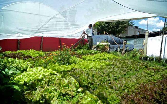 campo hortalizas orgánicas productores orgánicos comida verdura lechuga sistema biobolsa biodigestores camaroni producciones videografías sociales méxico desarrollo economía