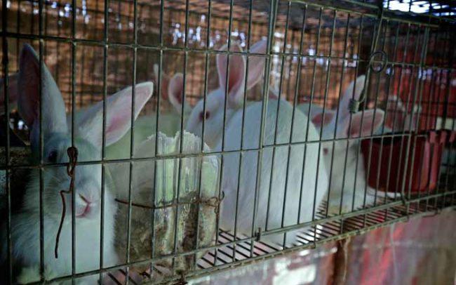 Conejo animales granja estiercol desarrollo sistema biobolsa tecnología biodigestor biogas camaroni