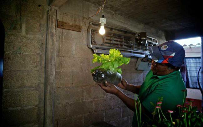 Lechuga orgullo productores orgánicos campo méxico desarrollo economía salud luz fotografía camaroni producciones videografías sociales reportaje