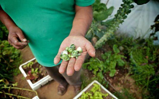 Productores Orgánicos hortalizas comida salud desarrollo economía sistema biobolsa fertilizante natural camaroni producciones videografías sociales mano hombre
