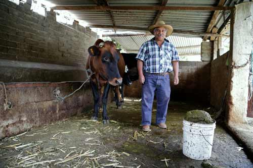 Retrato-granja-biodigestor-biobolsa-energia-renovable-vaca-beneficios