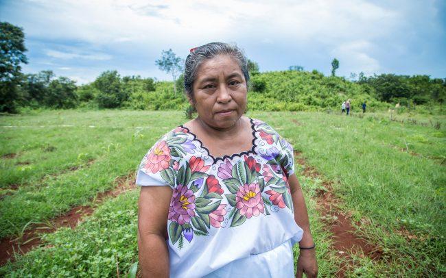 Promoviendo la agricultura orgánica en la Península de Yucatán